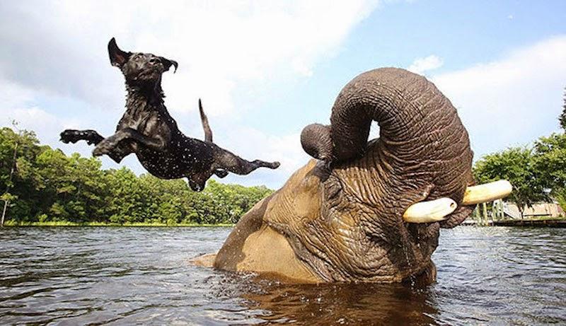 Dog & Elephant