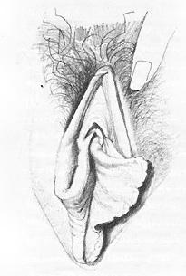 Жіночі статеві органи фото 5