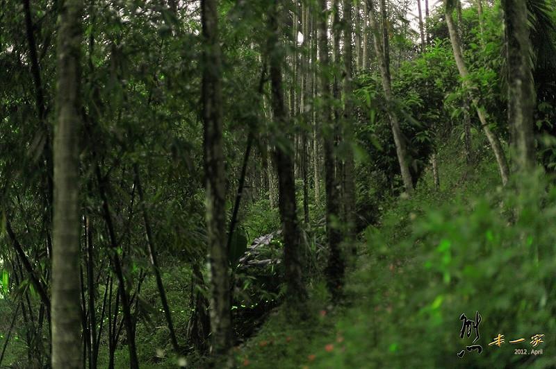 三峽賞螢下午茶 珍園 螢火蟲花園