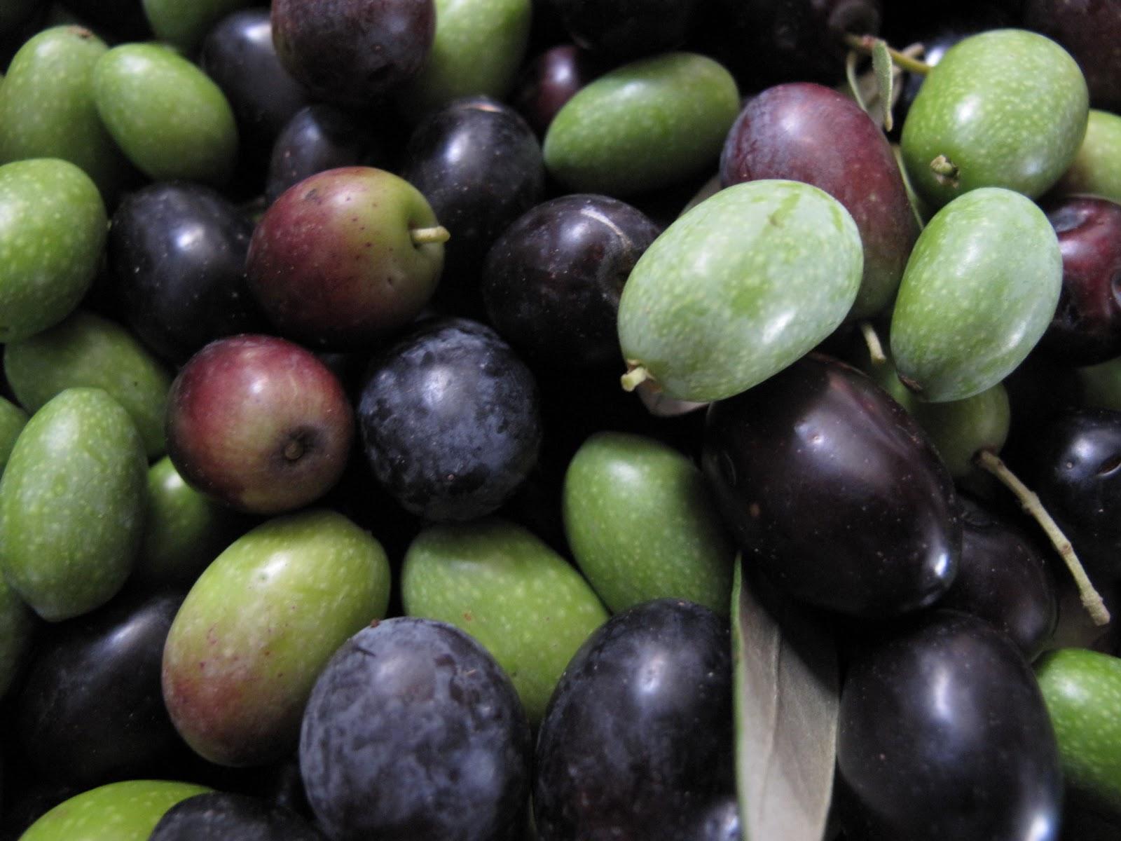 Blog di Gaetano: Che buono il nostro olio d'oliva!