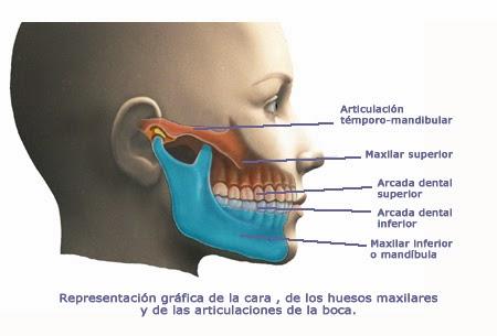 ejercicios para fortalecer los musculos de las cuerdas vocales