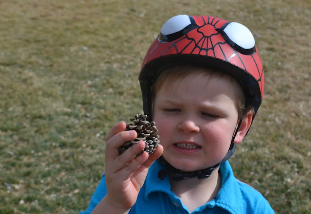 Pine Cone Bird Feeders, bird feeders, DIY pine cone bird feeders, DIY bird feeders, springtime crafts for kids, Snack Pack Pudding Cups, Pudding cups, Snack Pack, pine cone craft