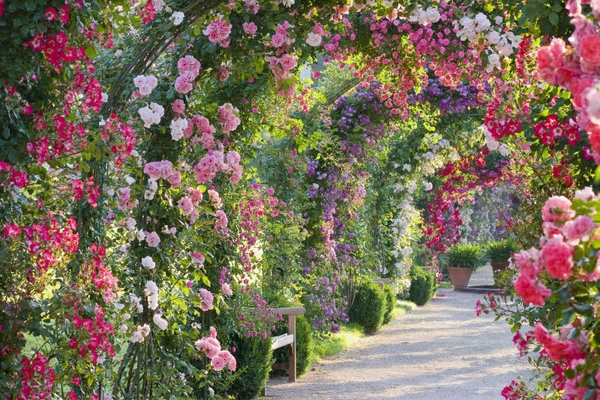 Rose Gardens Designs: Arch Of Roses