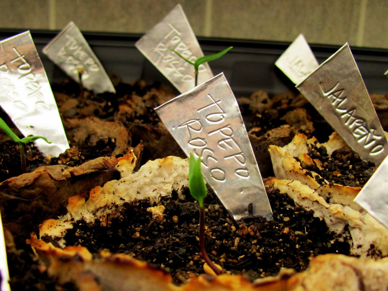 From mymngarden.com - Another way to use aluminum tape as seedling labels..You can make free seedling labels out of all kinds of things. Click to see more ideas for free and cheap labels for your plants. Owning Burton Farm and Misfit Gardening are teamed up for a Frugal Gardening Series. Come see what we're up to and get your garden started!..