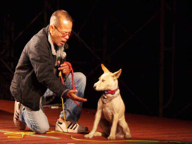 singer on stage, dog, won't give his paw