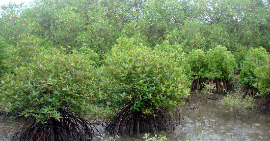 Apollo Tyres and Wildlife Trust of India team up to conserve mangroves | Wheelsology.com - World of Wheels