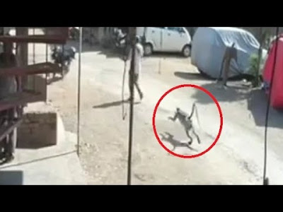 The monkey silently chased the man and attacked him from behind