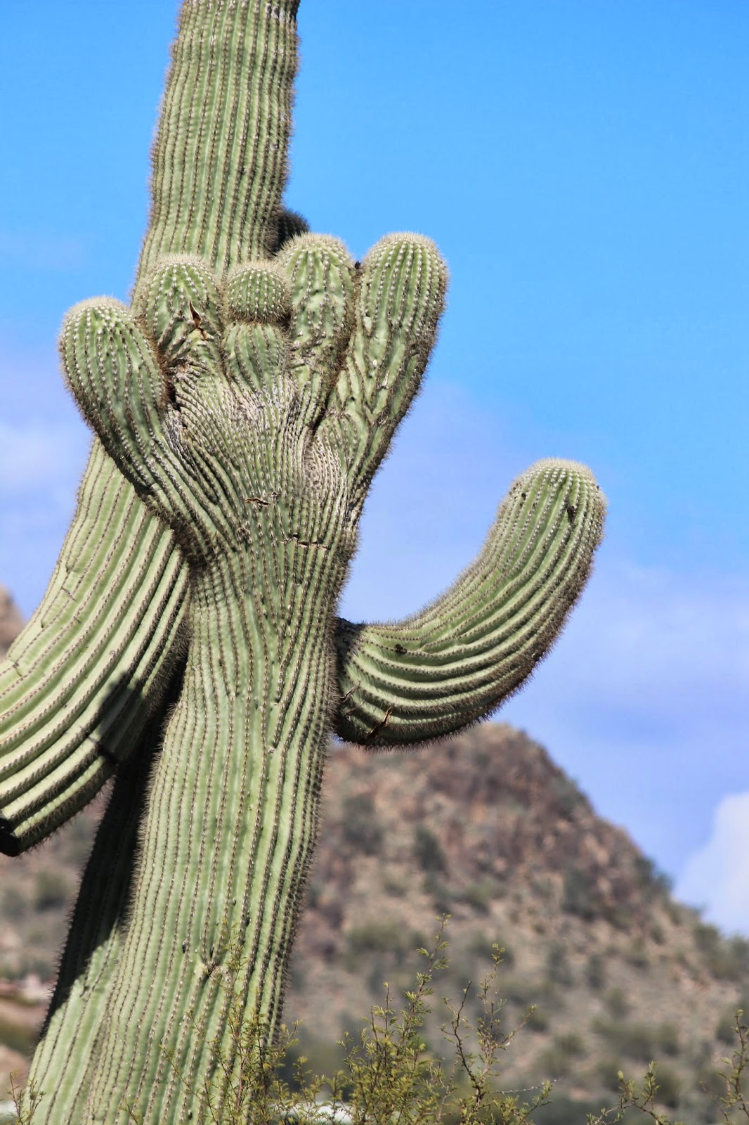 A saguaro cactus with a hand. (Photo by Kristy McCaffrey, author of Into the Land of Shadows.)