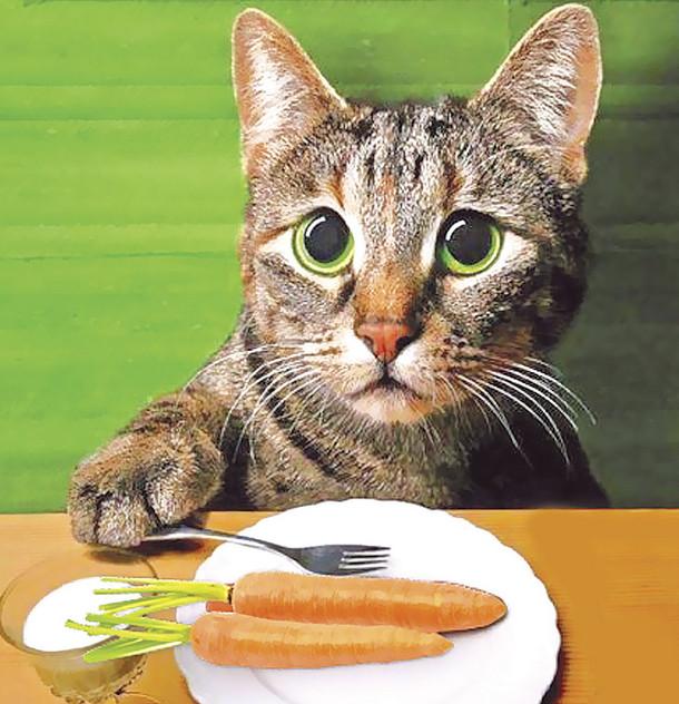 Кошка не хочет есть похудела