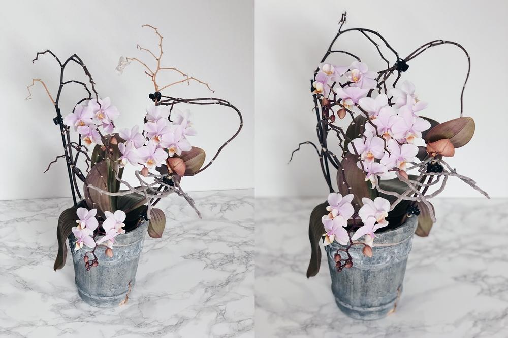 tipps tricks f r wundersch ne und gesunde orchideen fashion kitchen. Black Bedroom Furniture Sets. Home Design Ideas