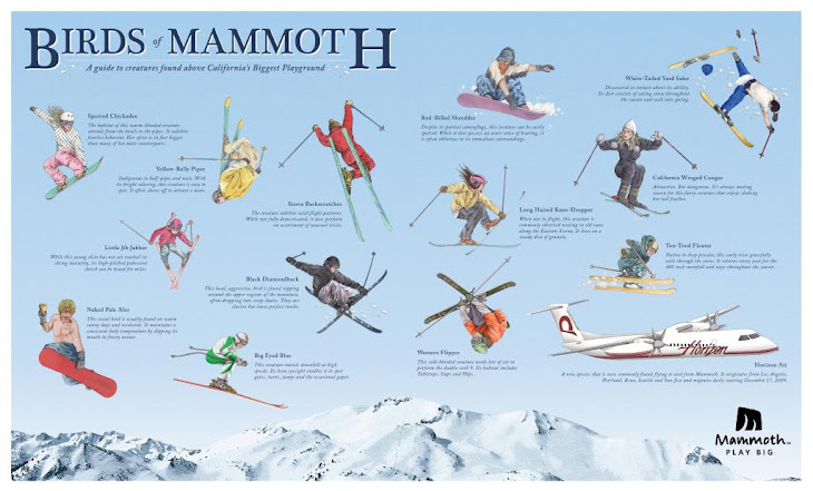 A Birds of the Mammoth
