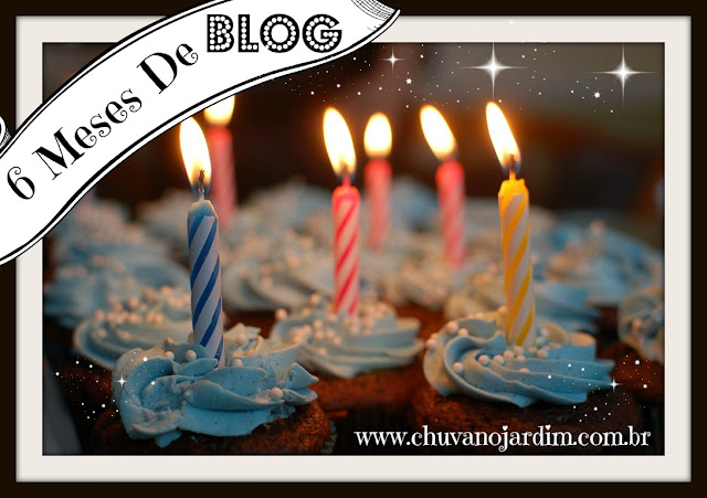 6 meses de blog