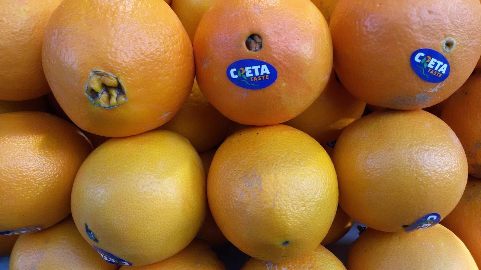 Πορτοκάλια Μέρλιν