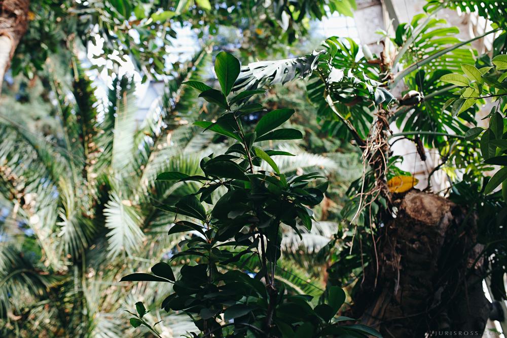 džungļi Rīgas centrā