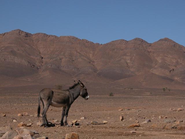 Esel Wüste