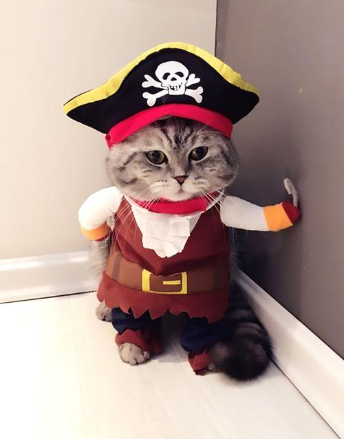 Cute Pirate Cat Wallpaper