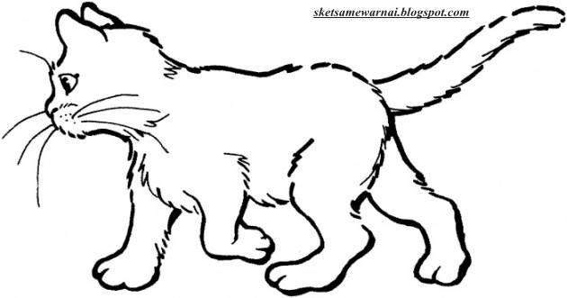 480 Koleksi Gambar Sketsa Binatang Kucing HD Terbaru