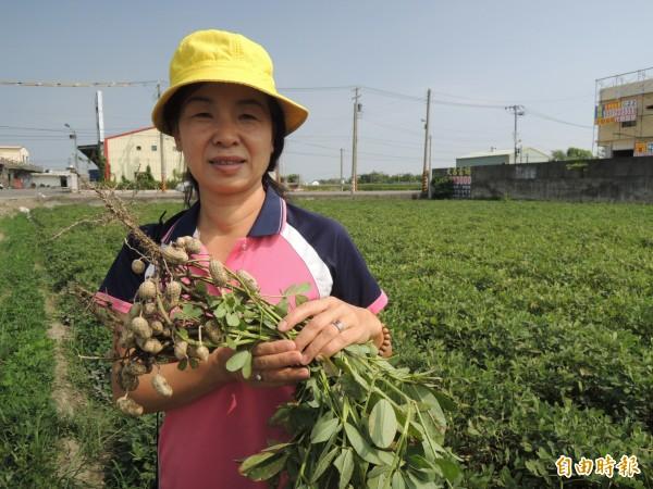 虎尾農會於11/19舉辦《挽土豆音樂會活動》體驗挽土豆和花生醬DIY,歡迎報名