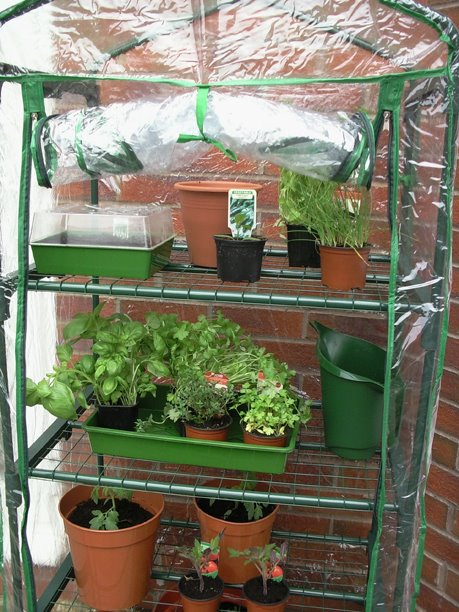 Growing Herbs and Veg
