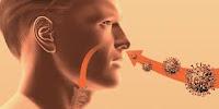 Seperti dikutip dari ivillage.co.uk, ada saluran di dalam mata yang terhubung rongga hidung. Rongga tersebut bisa menjadi jalan bagi masuknya kuman penyebab flu. Karena itu, menghindari menyentuh mata dan hidung merupakan salah satu cara mencegah sakit flu.