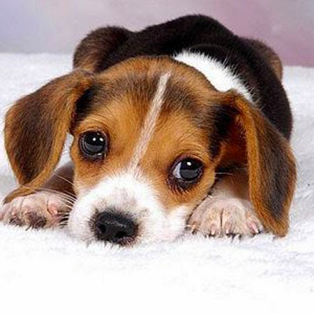 Surviving the First Night with Your Puppy