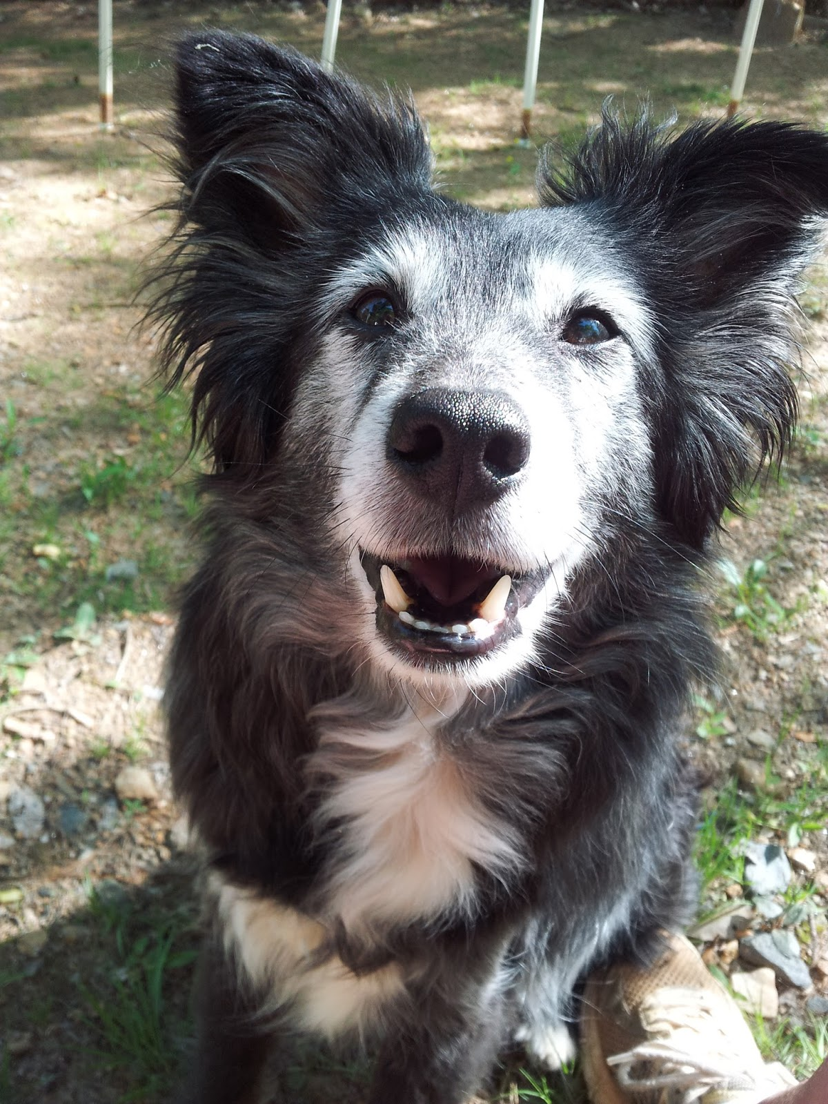Image Result For Dog Training Facility