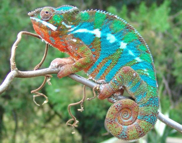 6400 Gambar Dan Nama Hewan Reptil HD Terbaru