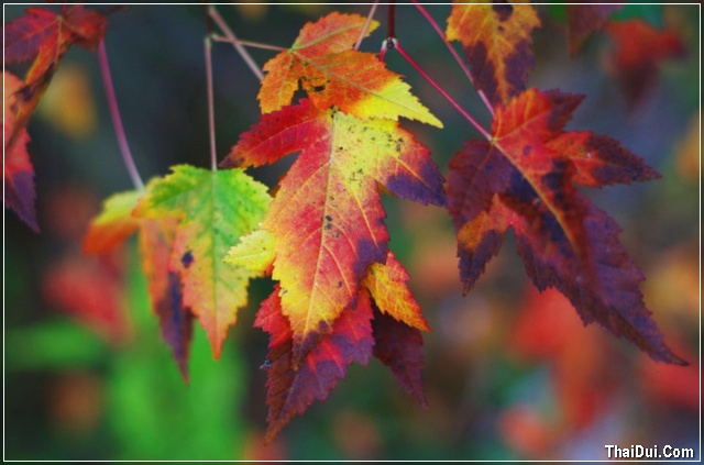 những chiếc lá mùa thu tàn úa