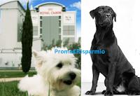 Logo Diventa ambassador Royal Canin e vinci viaggio in Camargue