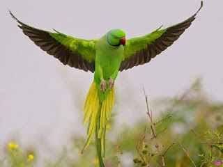एक शिक्षाप्रद कहानी - अगर आजादी चाहते हो तो पहले मरना सीखो | Motivational Story In Hindi | Gyansagar ( ज्ञानसागर )