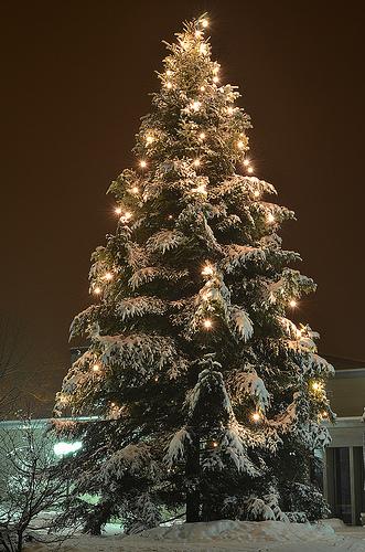 Oh Tannenbaum Oh.La Pouyette O Christmas Tree Oh Tannenbaum