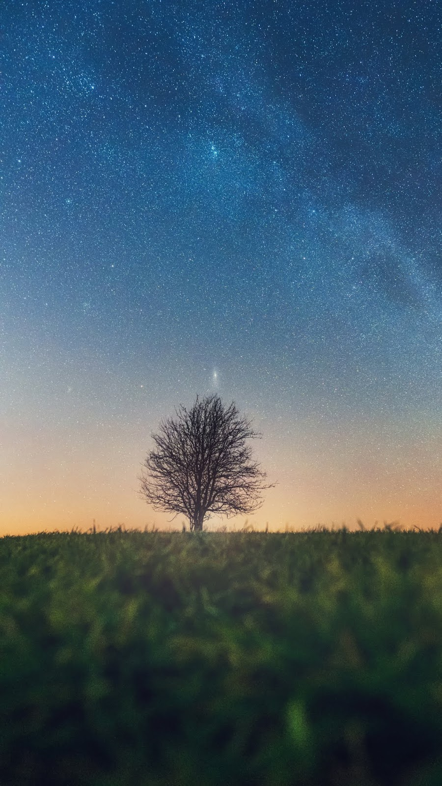 Lonely tree in the starry sky