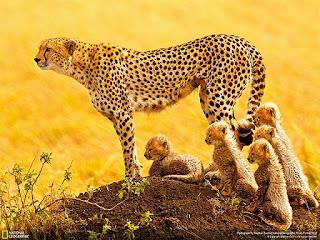 أجمل صور و خلفيات ناشونال جيوجرافيك تحميل مجاني National Geographic Wallpapers - 2013