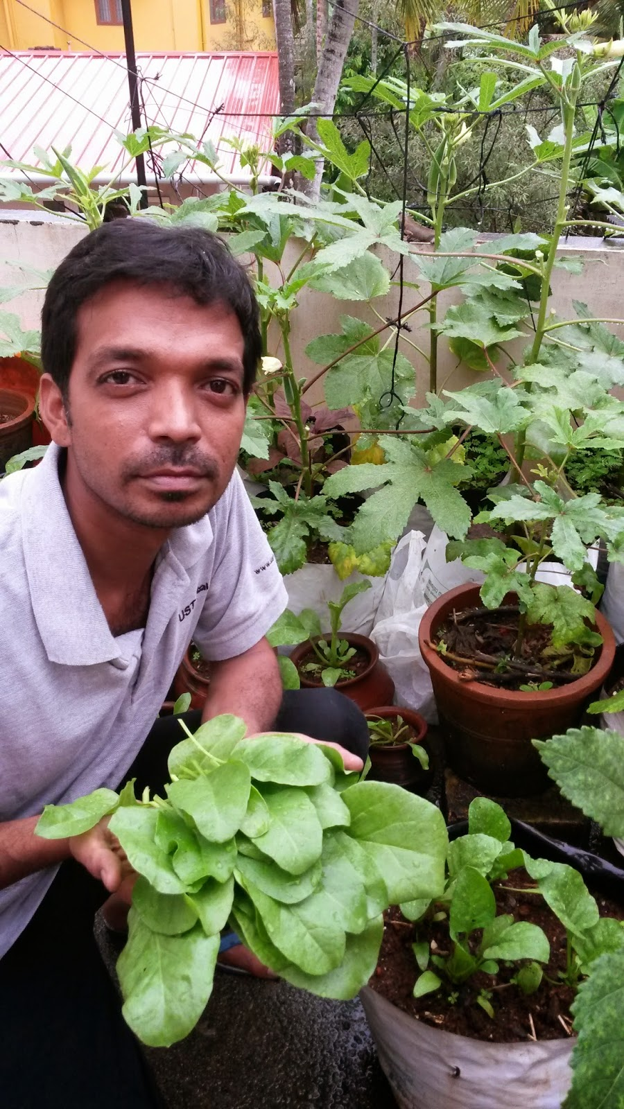 Organic micro farm and vegetable terrace garden spinach for Terrace garden in india