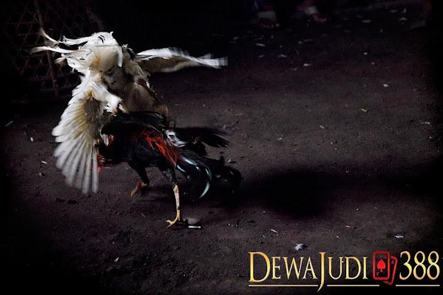 Dewajudi388 Agen Resmi Sbobet Terpercaya di Indonesia