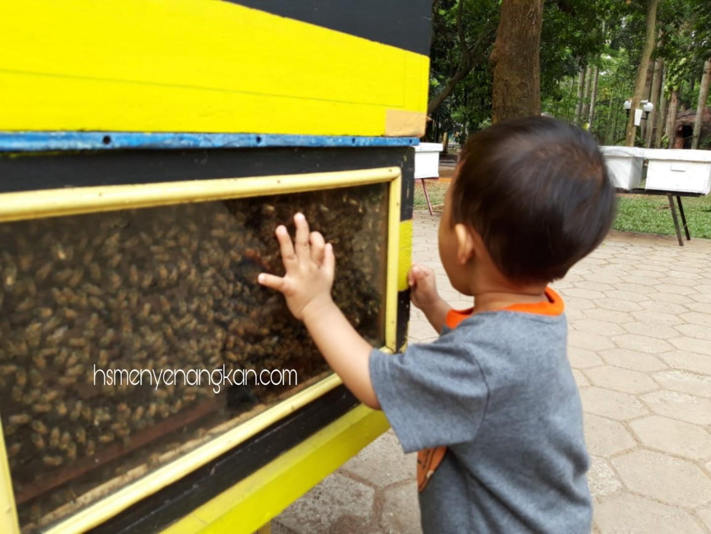 Wisata Edukasi Taman Lebah Cibubur