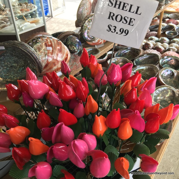 shell roses at The Shell Shop in Morro Bay, California