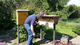 Alemania y el auge de la apicultura urbana 1