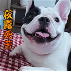 French bulldog YUA Sticker