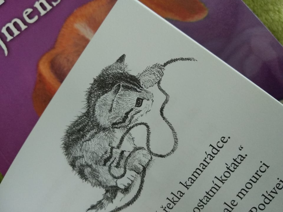 Malé latina kočička fotky