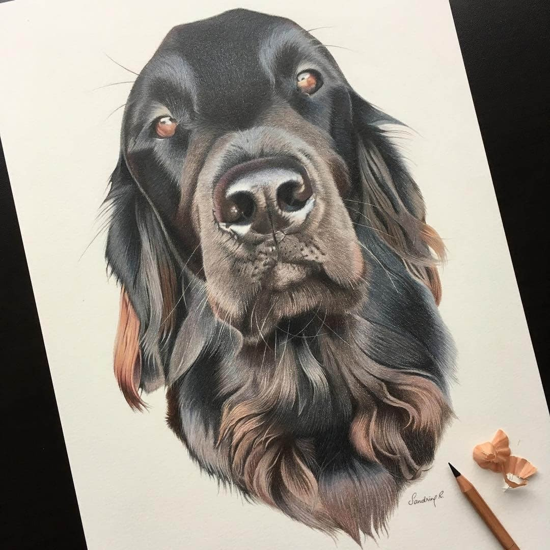06-Flat-Coated-Retriever-Sandrine-R-Sweet-Realistic-Animal-Portrait-Drawings-www-designstack-co