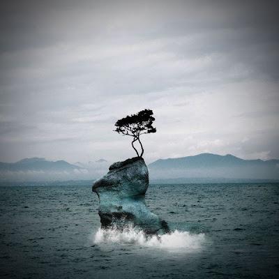 El mar con una roca y un árbol
