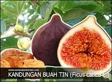 Kandungan lengkap buah tin (Ficus carica L.)