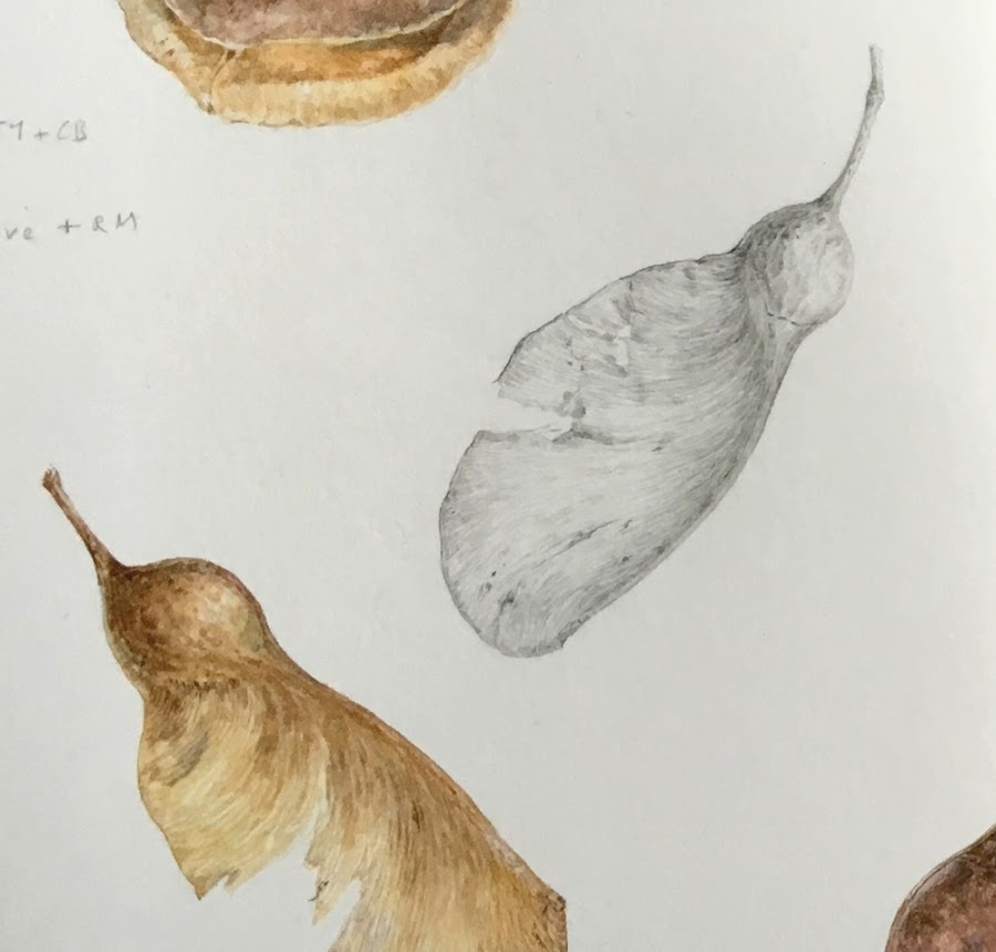Maple seeds drawing and painting