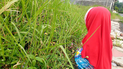 cara menstimulasi kecerdasan naturalis anak