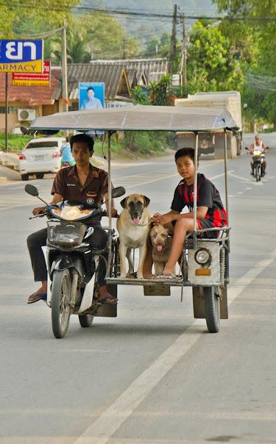 Собаки в коляске скутера