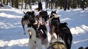 cães no frio