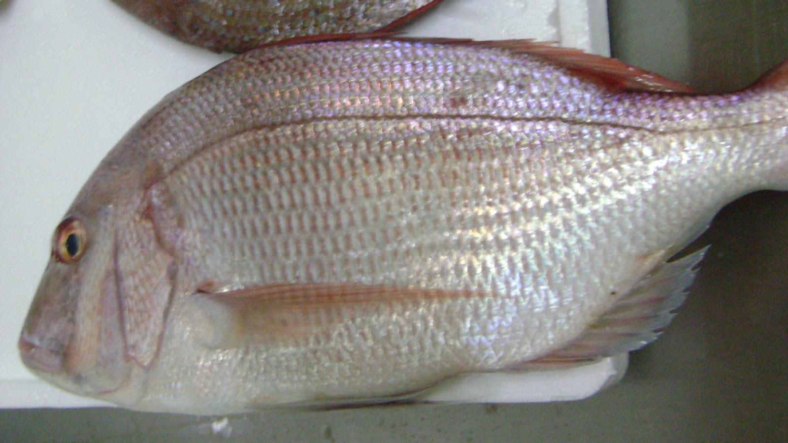 Sea bream in spanish for Fish in spanish