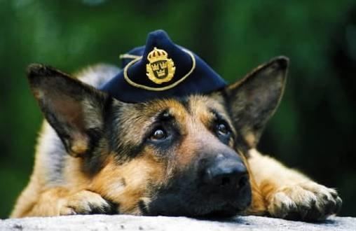 Under Mattan Polisen Sk 214 T Tv 197 Hundar Med 25 Skott
