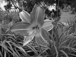 Foto em Preto e Branco
